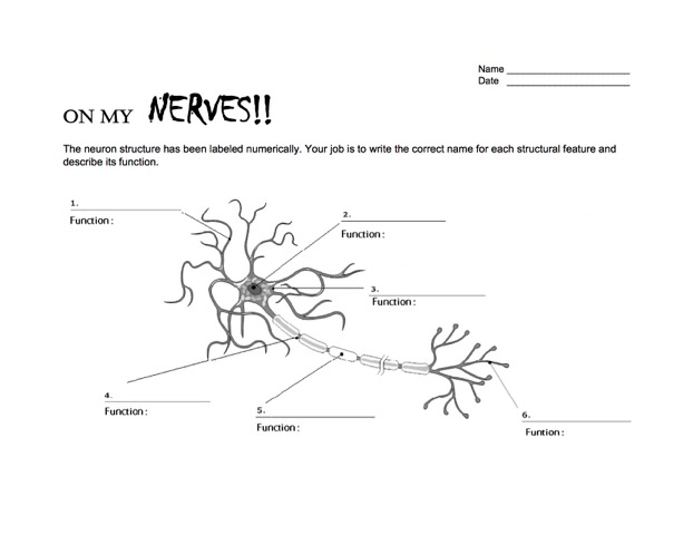 Day three skyview neurotransmitters and drugs nw noggin nwnoggin neuron worksheet ccuart Choice Image