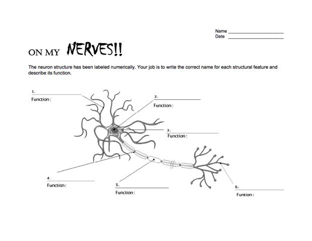 Giant neurons mccoy day two nw noggin neuroscience outreach nwnoggin neuron worksheet ccuart Images