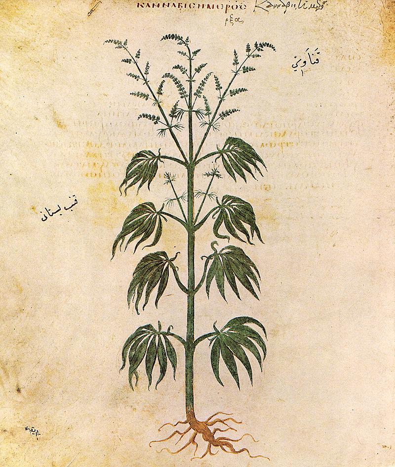 Cannabis Vienna Dioscurides