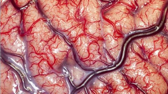 living-brain-photographed-550x309