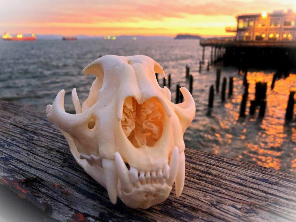 Living like bears – NW NOGGIN: Neuroscience outreach group